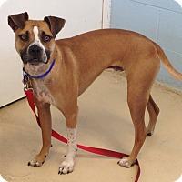 Adopt A Pet :: RACCOON - EDEN PRAIRIE, MN