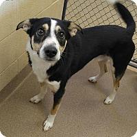 Adopt A Pet :: 1-12 Zeus - Triadelphia, WV