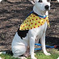 Adopt A Pet :: Tanzie Sue - New Oxford, PA