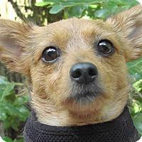 Adopt A Pet :: Mia - St Louis, MO