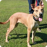Adopt A Pet :: Nessa - Salem, NH