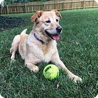 Adopt A Pet :: Mollie - Chattanooga, TN