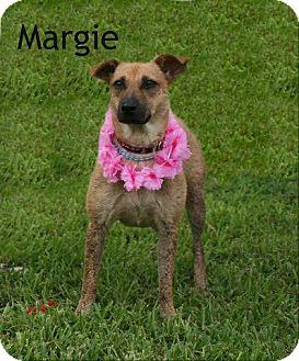 Terrier (Unknown Type, Medium) Mix Dog for adoption in Houston, Texas - Margie