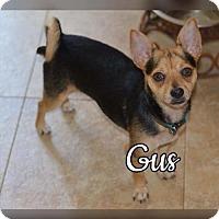Adopt A Pet :: Gus - Willingboro, NJ