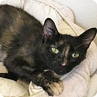 Adopt A Pet :: Joonie - Colorado Springs, CO