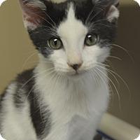 Adopt A Pet :: Otter - Germantown, TN