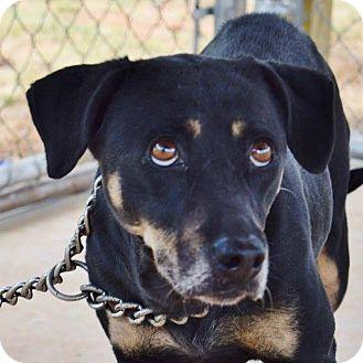 Beagle Mix Dog for adoption in Suwanee, Georgia - Mimzy