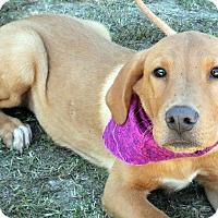 Adopt A Pet :: Steinson - Kimberton, PA