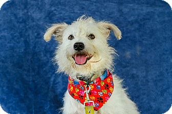 Terrier (Unknown Type, Small) Mix Dog for adoption in Nanaimo, British Columbia - Cassidy