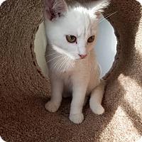 Adopt A Pet :: Glacier - Glen Mills, PA