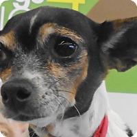 Adopt A Pet :: Granny - St Louis, MO