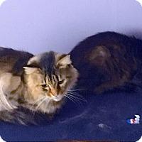 Adopt A Pet :: Annie & Elliott - URGENT - Fowlerville, MI