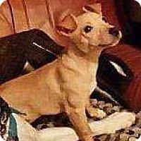Adopt A Pet :: Jellybean - Dayton, OH