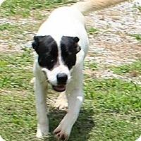 Adopt A Pet :: Molly (Urgent) - Brattleboro, VT