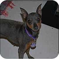 Adopt A Pet :: Payton - Minneapolis, MN