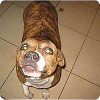 Adopt A Pet :: Tasha-Adoption Pending!!! - Antioch, IL