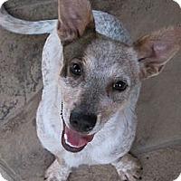 Adopt A Pet :: Balto - Houston, TX