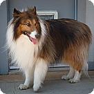 Adopt A Pet :: Jessie