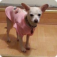 Adopt A Pet :: Pixie - Caledon, ON