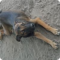 Adopt A Pet :: Pumba - West Hartford, CT