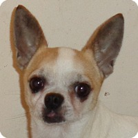 Adopt A Pet :: Skippy - Crump, TN