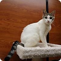 Adopt A Pet :: Gypsy - Greensboro, GA