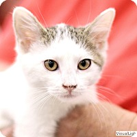 Adopt A Pet :: Sky - Westchester, CA