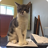 Adopt A Pet :: Dezi - Jupiter, FL