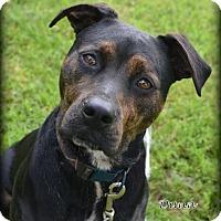 Adopt A Pet :: Dunn - Independence, MO