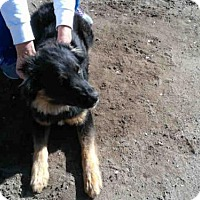 Adopt A Pet :: A1019908 - Bakersfield, CA