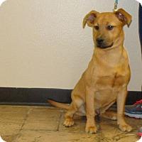 Adopt A Pet :: Zeus - Oviedo, FL
