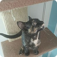 Adopt A Pet :: Sara - Brightwaters,, NY