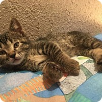 Adopt A Pet :: Poppy - Hurst, TX