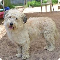 Adopt A Pet :: Slider - Austin, TX