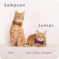 Adopt A Pet :: Sampson - Riverside, CA