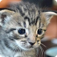 Adopt A Pet :: Pikachu - New Orleans, LA