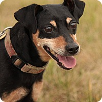 Adopt A Pet :: Rocky - Lafayette, IN