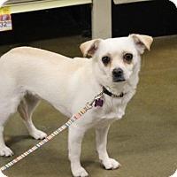 Adopt A Pet :: Josephine - Forreston, TX