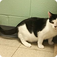 Adopt A Pet :: Carbon - Union, NJ