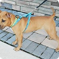 Adopt A Pet :: Nyla - Umatilla, FL