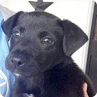 Adopt A Pet :: Smokey - CUMMING, GA
