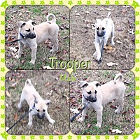 Adopt A Pet :: Trooper-pending adoption - Manchester, CT