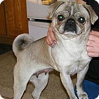 Adopt A Pet :: Florida - Hinckley, MN