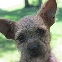 Adopt A Pet :: Payton - Brattleboro, VT