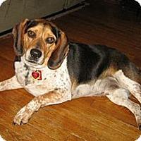 Adopt A Pet :: Fonzie - Novi, MI