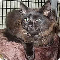 Adopt A Pet :: Cider - Medina, OH