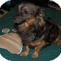 Adopt A Pet :: Louie - Shawnee Mission, KS