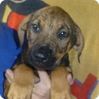 Adopt A Pet :: Titus - Oviedo, FL