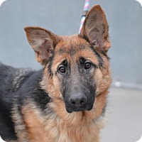 Adopt A Pet :: RILEY - Tully, NY