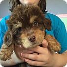 Adopt A Pet :: Alfred
